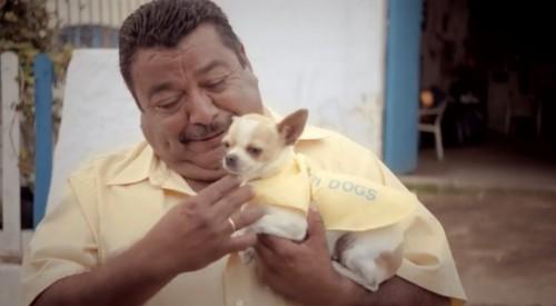 Jose Wi-Fi Dogs