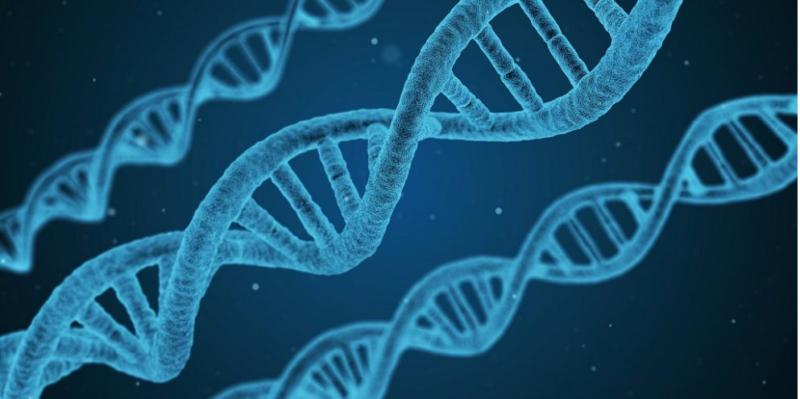 DNA MyHeritage