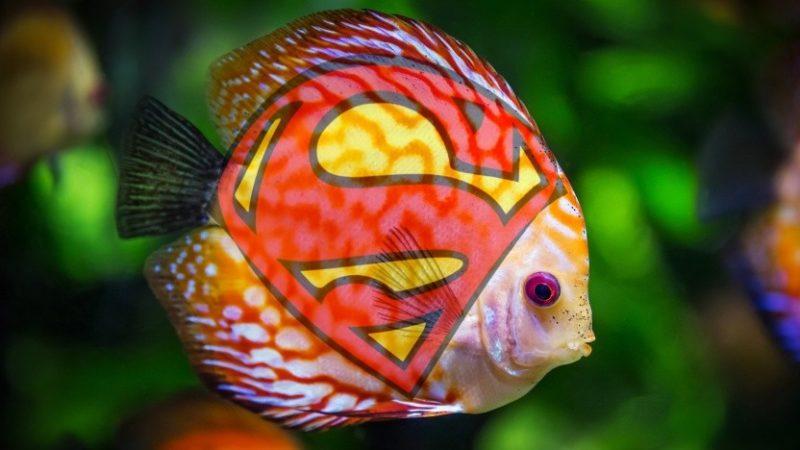 Reklamą Superfish Adware będzie kosztowała kompanii Lenovo 7,3 mln dolarów 1