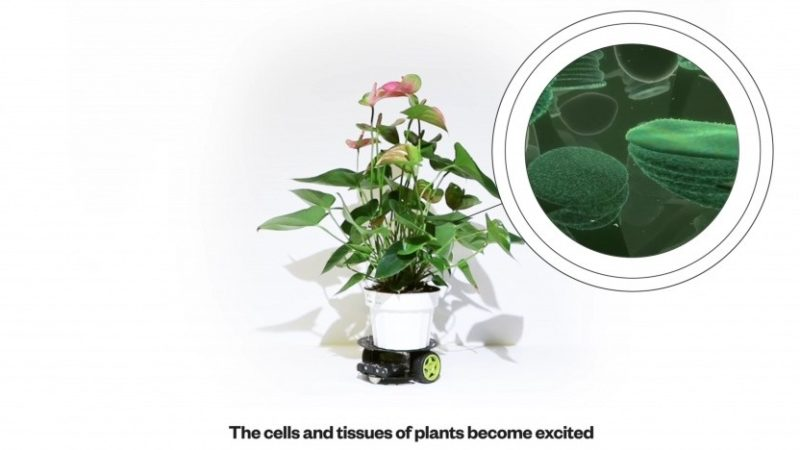 Roślina steruje robotem