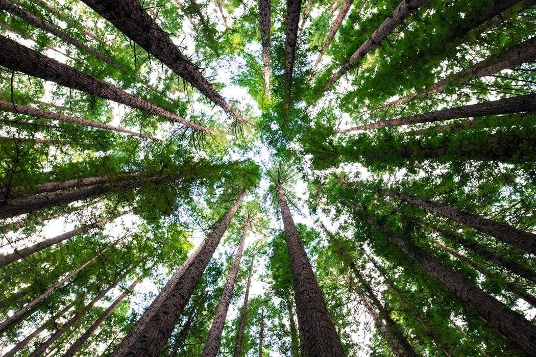 Zielony rok Banku Zielonych Zmian – Bank BNP Paribas posadził 60 000 drzew