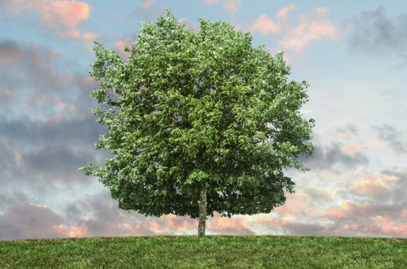 Pro-eko i praca: Polacy o wpływie ekologii na rekrutację