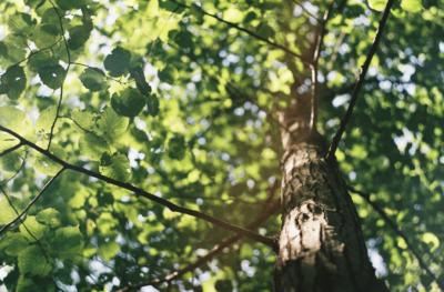 Milion posadzonych drzew dzięki odnowionej elektronice